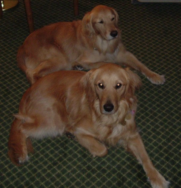 Max and Titan lay the same way on the floor resting in the Days Inn room on 4/10/05.