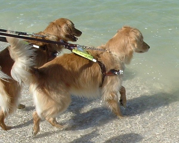 Titan and Max look longingly at the waves at Gulf coast of Florida on 4/11/05.